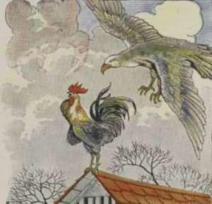 ayam jantan dan elang